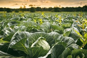 Why Postharvest Handling is Important